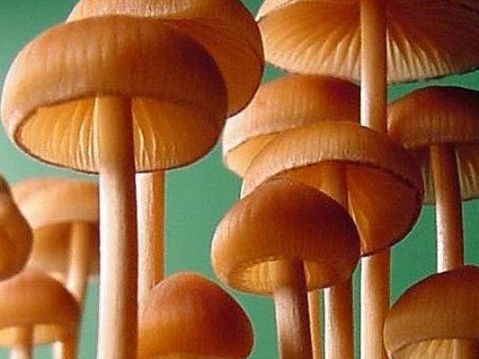"""Лекция «Священные грибы: часть 2». Лекция проекта """"Популярный лекторий"""" журнала """"Популярная механика"""""""